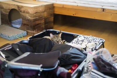 スーツケースに荷物と猫が入っている荷造りの様子
